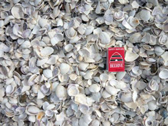 13 22 crushed shell for Crushed oyster shells for landscaping